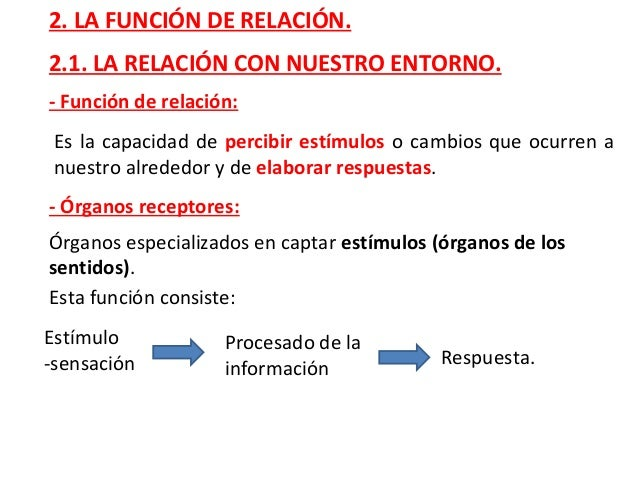Tema 3 el cuerpo humano y la relaci n for Interior del cuerpo humano