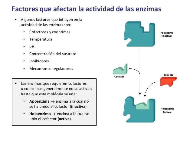 funciones de las enzimas
