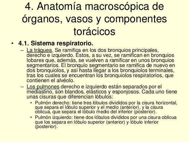 Tema 3. Necropsias