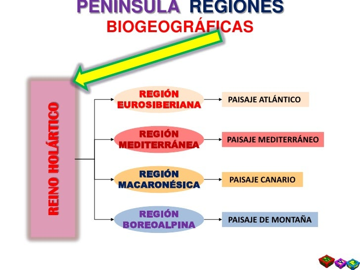 Tema 3  Diversidad HíDrica Y Biogeografica Ii Slide 3