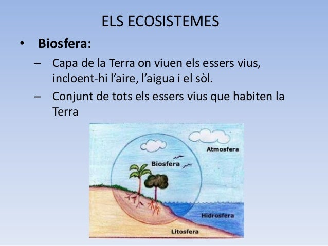 Els Ecosistemes Slide 2