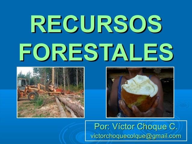 Tema 3 recursos forestales mundiales 2013 for Importancia de los viveros forestales