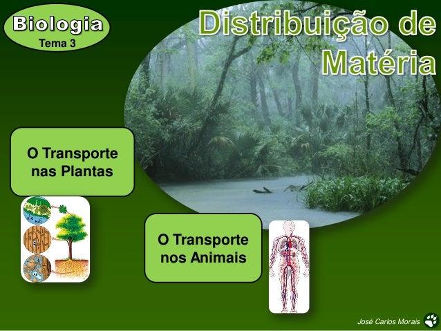 Tema 3  O Transporte nas Plantas  O Transporte nos Animais  José Carlos Morais