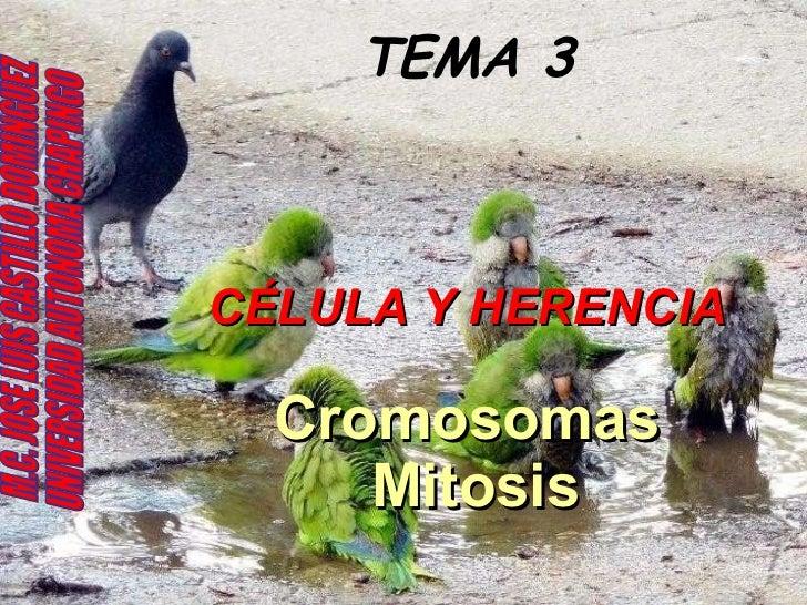 TEMA 3 CÉLULA Y HERENCIA Cromosomas  Mitosis M.C. JOSE LUIS CASTILLO DOMINGUEZ UNIVERSIDAD AUTONOMA CHAPINGO