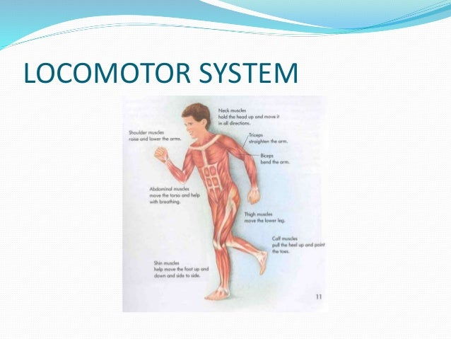 LOCOMOTOR SYSTEM