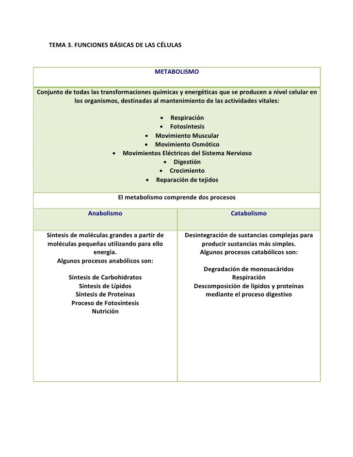 TEMA 3. FUNCIONES BÁSICAS DE LAS CÉLULAS                                        METABOLISMOConjunto de todas las transform...