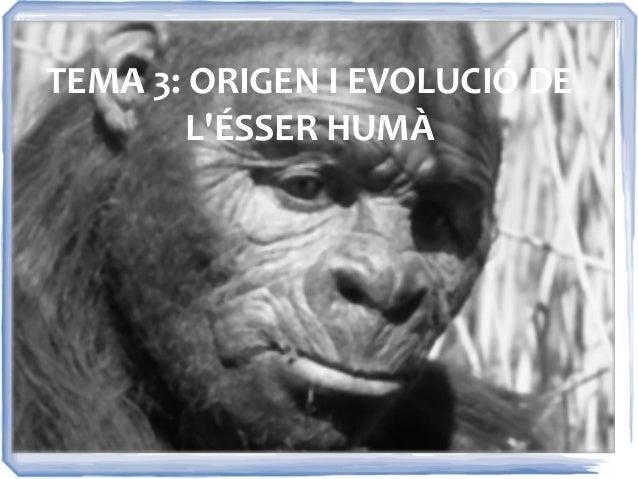TEMA 3: ORIGEN I EVOLUCIÓ DE        LÉSSER HUMÀ