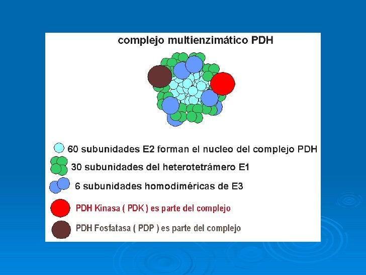 Rutas centrales del metabolismo intermediario