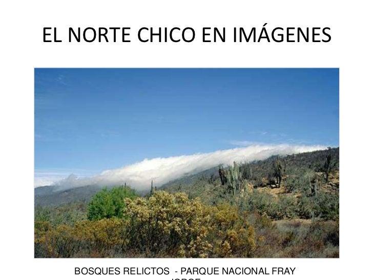 BOSQUES RELICTOS  - PARQUE NACIONAL FRAY JORGE<br />EL NORTE CHICO EN IMÁGENES<br />