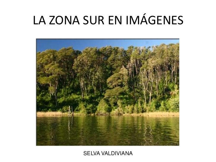 LA ZONA SUR EN IMÁGENES<br />SELVA VALDIVIANA<br />