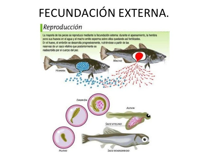 Tema 4 for Como se cultivan los peces
