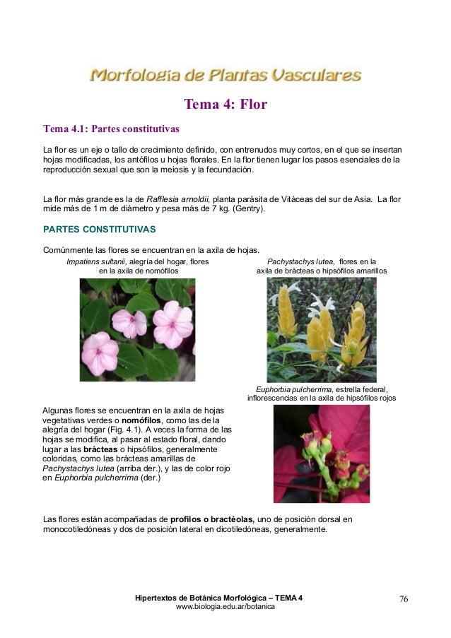 Tema 4: Flor Tema 4.1: Partes constitutivas La flor es un eje o tallo de crecimiento definido, con entrenudos muy cortos, ...