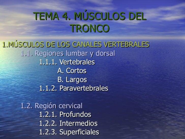 TEMA 4. MÚSCULOS DEL TRONCO 1.MÚSCULOS DE LOS CANALES VERTEBRALES 1.1. Regiones lumbar y dorsal 1.1.1. Vertebrales A. Cort...