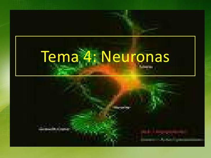 Tema 4: Neuronas