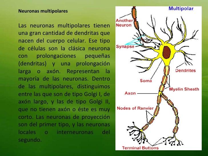 Tema 4 neuronas