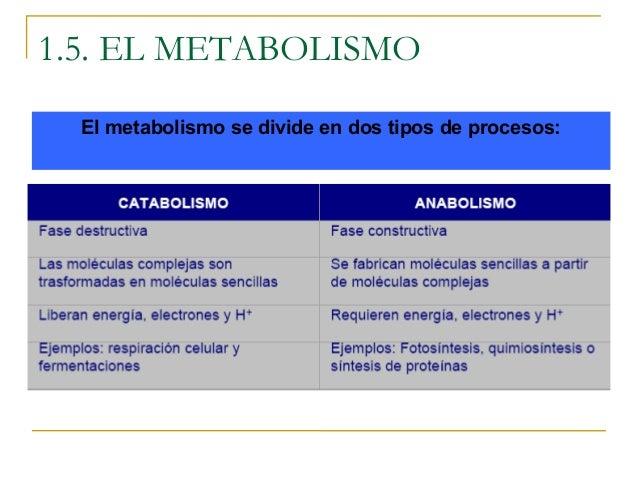 metabolismo de lipoproteinas Mentalidad