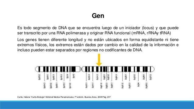 Gen Es todo segmento de DNA que se encuentra luego de un iniciador (locus) y que puede ser transcrito por una RNA polimera...