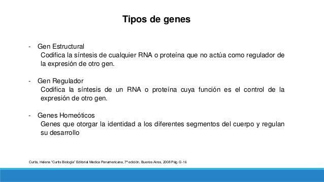 Tipos de genes ‒ Genes Supresores de tumores Grupo de genes capaces de frenar la división celular a través de diferentes i...