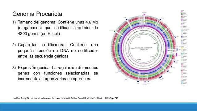 Genoma Eucariota 1) Tamaño del genoma: a pesar de ser más grandes que el de las procariotas, el tamaño no es una medida de...