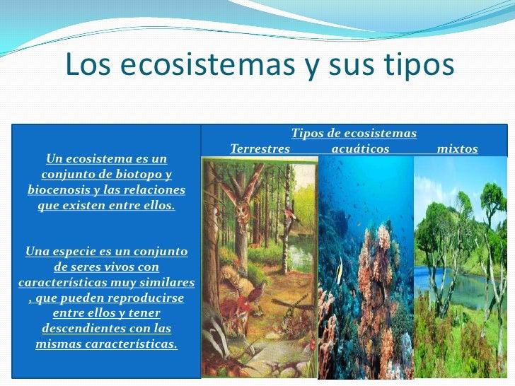 Tema 4 los ecosistemas for Tipos de arboles y caracteristicas