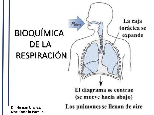 BIOQUÍMICA DE LA RESPIRACIÓN Dr. Hernán Urgílez. Msc. Ornella Portillo.