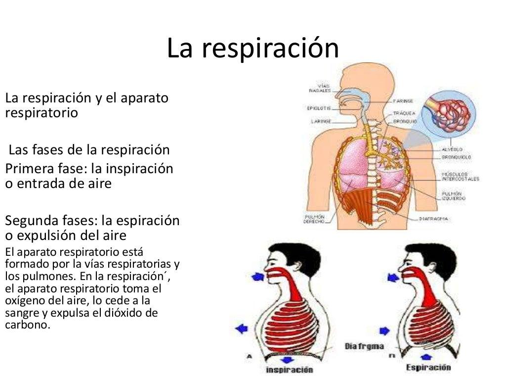 Tema 4: Respiración, circulación y excreción
