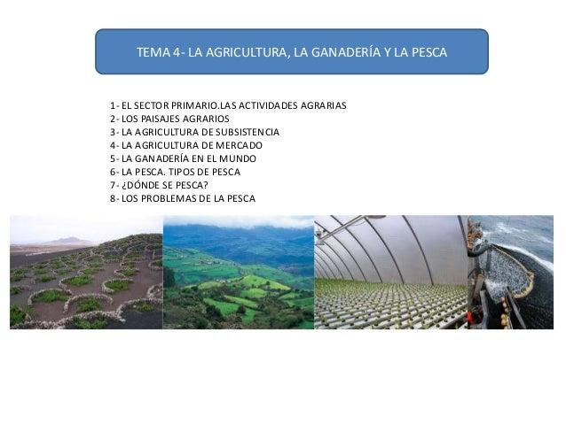 TEMA 4- LA AGRICULTURA, LA GANADERÍA Y LA PESCA  1- EL SECTOR PRIMARIO.LAS ACTIVIDADES AGRARIAS 2- LOS PAISAJES AGRARIOS 3...