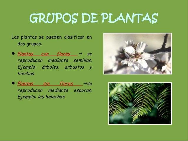grupos de plantaslas plantas se pueden clasificar en dos grupos