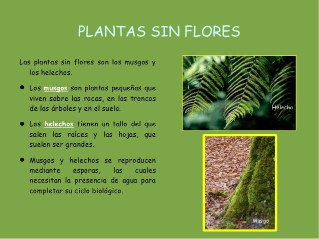 Tema 4 las plantas - Cuales son las plantas con flores ...