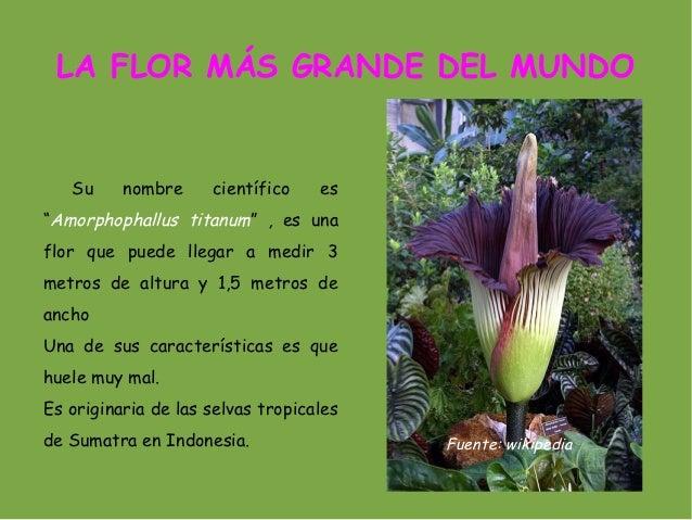 Tema 4 las plantas - Clases de flores y sus nombres ...