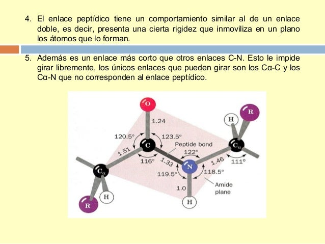Tema 4 Proteinas