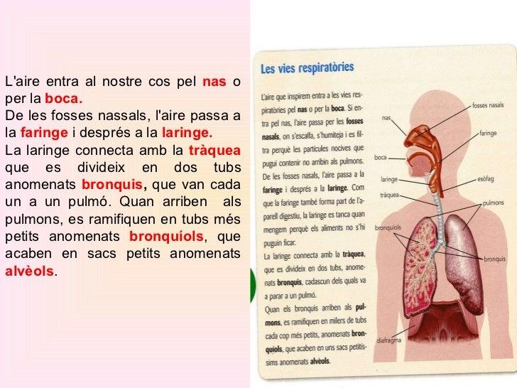 L'aire entra al nostre cos pel  nas  o per la  boca. De les fosses nassals, l'aire passa a la  faringe   i  després a la  ...