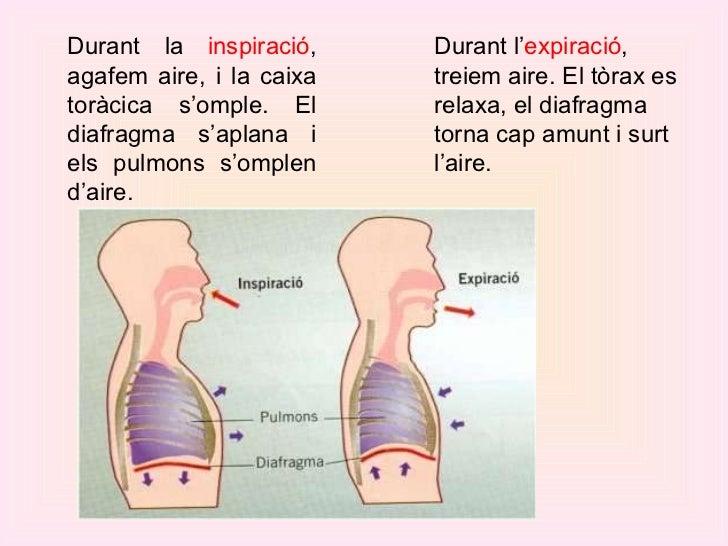 Durant la  inspiració , agafem aire, i la caixa toràcica s'omple. El diafragma s'aplana i els pulmons s'omplen d'aire. Dur...