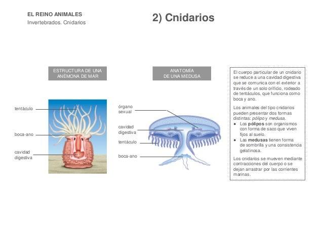 Tema 4 y 5 . Los animales 15-16