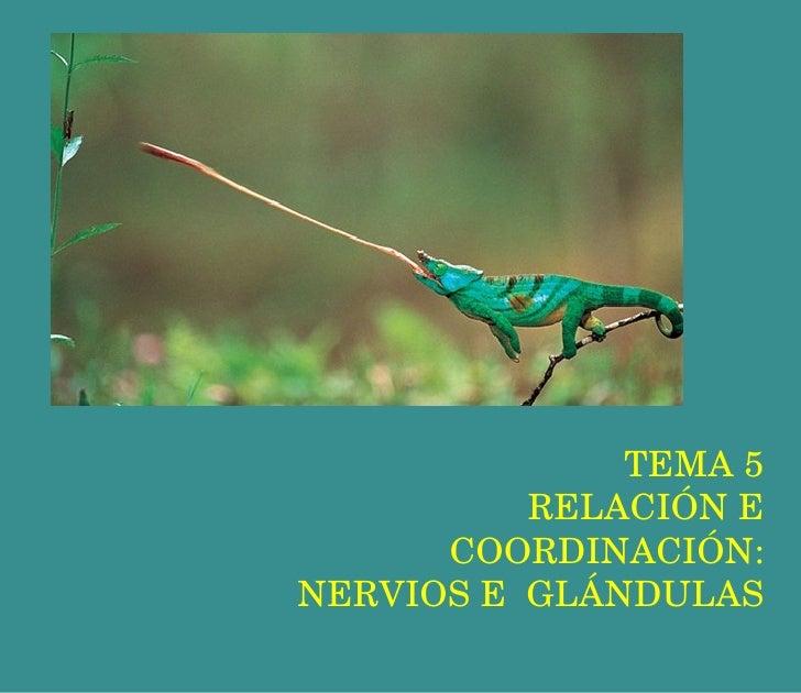 TEMA 5 RELACIÓN E COORDINACIÓN: NERVIOS E  GLÁNDULAS