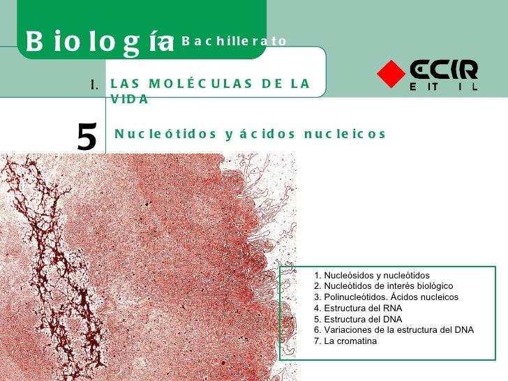 LAS MOLÉCULAS DE LA VIDA I. 5 Nucleótidos y ácidos nucleicos Biología 2º Bachillerato 1. Nucleósidos y nucleótidos 2. Nucl...