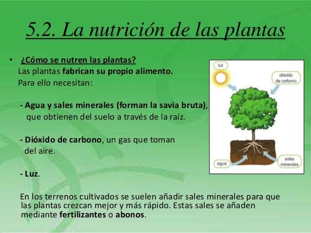 Tema 5 las plantas for Como se llaman las plantas ornamentales