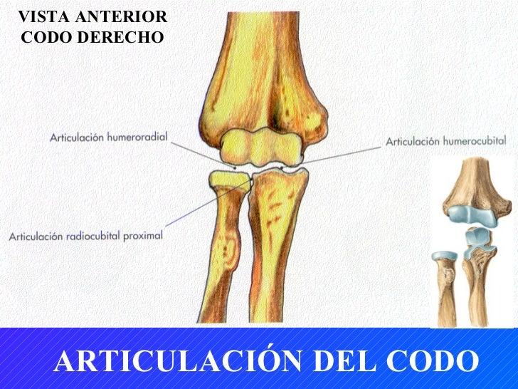 Tema 5. huesos del miembro superior