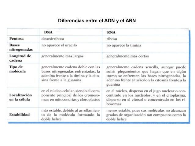 Tema 5 Los ácidos Nucleicos