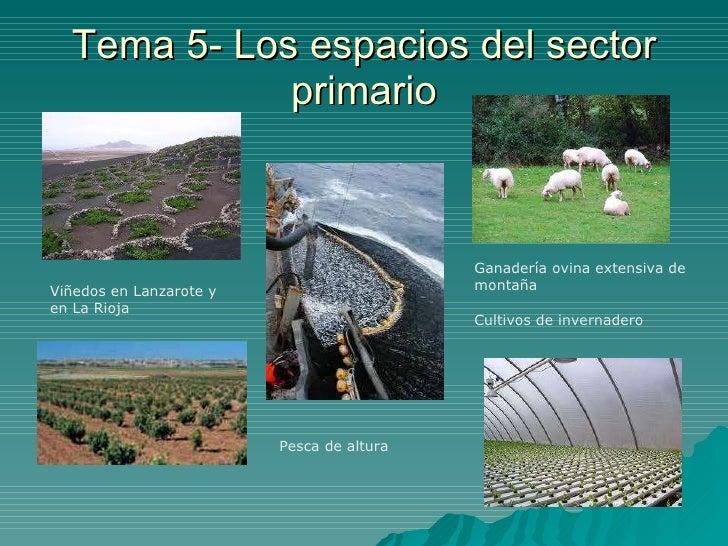 Tema 5- Los espacios del sector primario Viñedos en Lanzarote y en La Rioja Ganadería ovina extensiva de montaña Cultivos ...