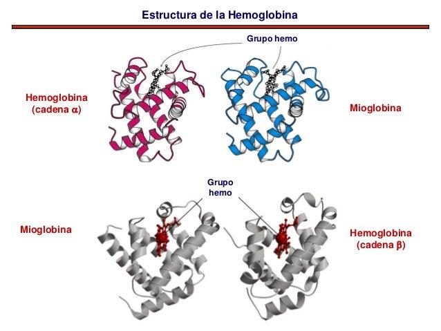 Tema 5 Proteinas Estructura 4a Hemoglobina Farmacia