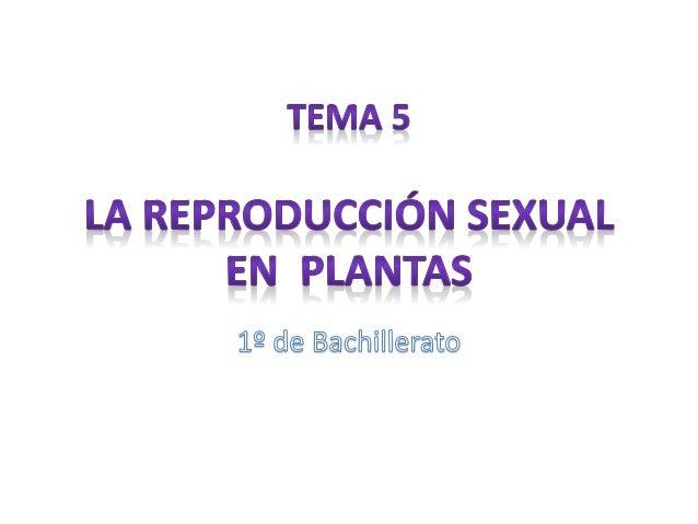 Índice • Reproducción en espermatofitas – Gimnospermas – Angiospermas • Fecundación y formación de la semilla • Dispersión...