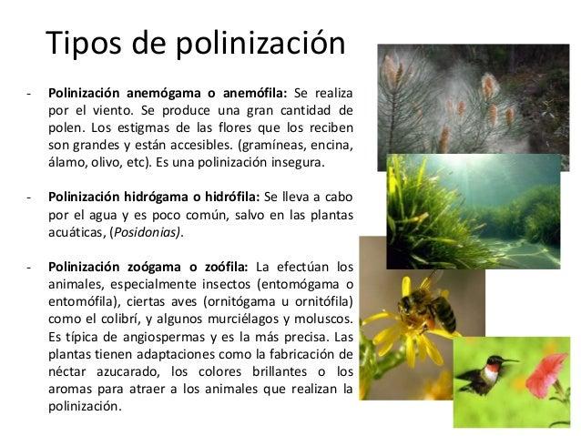 Tema 5 1 bach reproducci n de las plantas for Cuales son los tipos de plantas