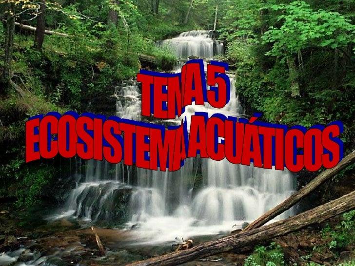 TEMA 5 ECOSISTEMA ACUÁTICOS