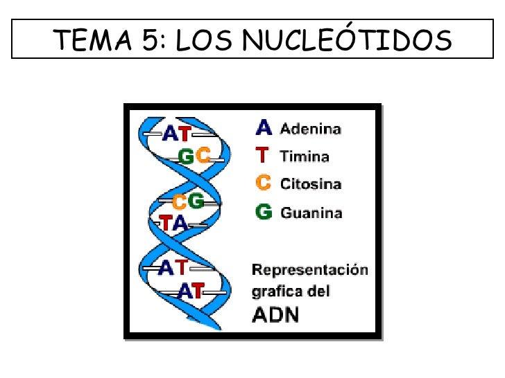TEMA 5: LOS NUCLEÓTIDOS