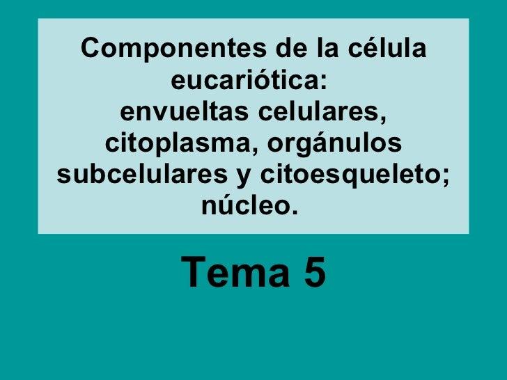 Componentes de la célula eucariótica:  envueltas celulares, citoplasma, orgánulos subcelulares y citoesqueleto; núcleo.   ...