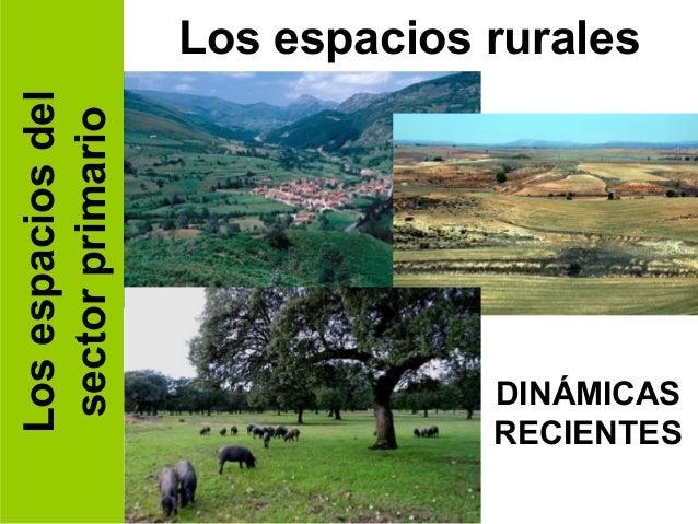 Los espacios del   Los espacios rurales sector primario                                DINÁMICAS                          ...
