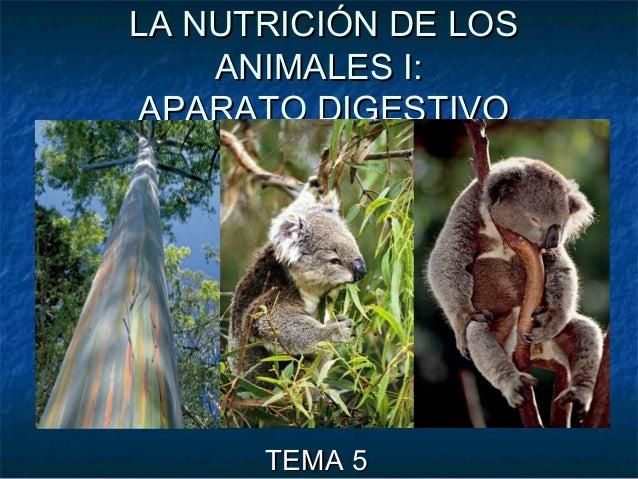LA NUTRICIÓN DE LOSLA NUTRICIÓN DE LOS ANIMALES I:ANIMALES I: APARATO DIGESTIVOAPARATO DIGESTIVO TEMA 5TEMA 5