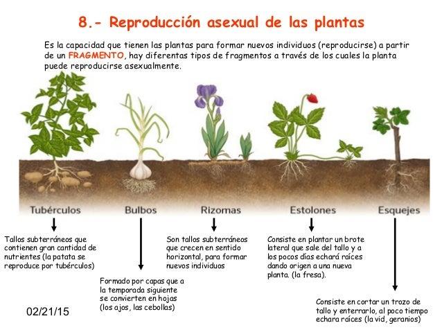 Nombre de plantas que se reproducen asexualmente
