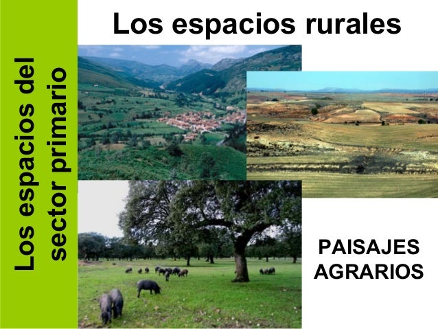 Los espacios del   Los espacios rurales sector primario                                PAISAJES                           ...
